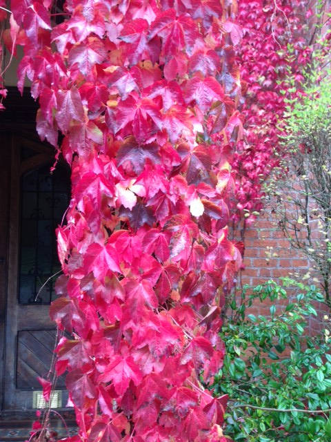 image showing Autumn in England, My favourite season.