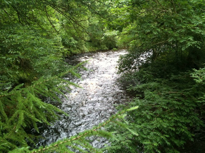 image showing Scenes from the Forest of Ae in Scotland Where We Spent a Lovely Weekend